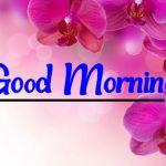 Flower Good morning Images 95
