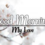 Flower Good morning Images 99