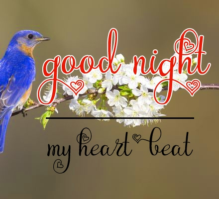 Free good night Images 25