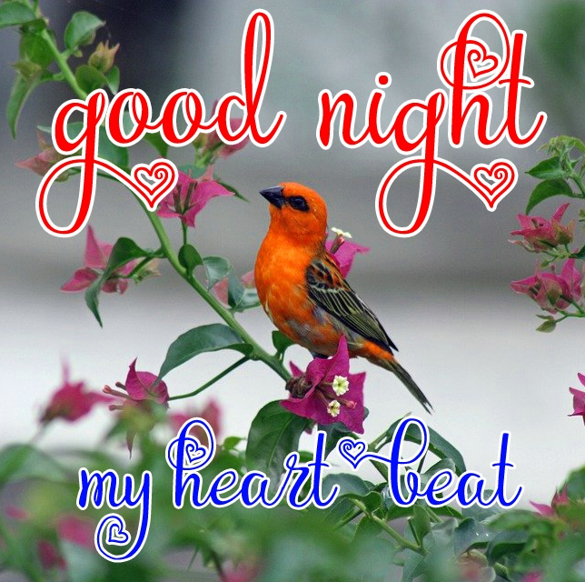 Free good night Images 35