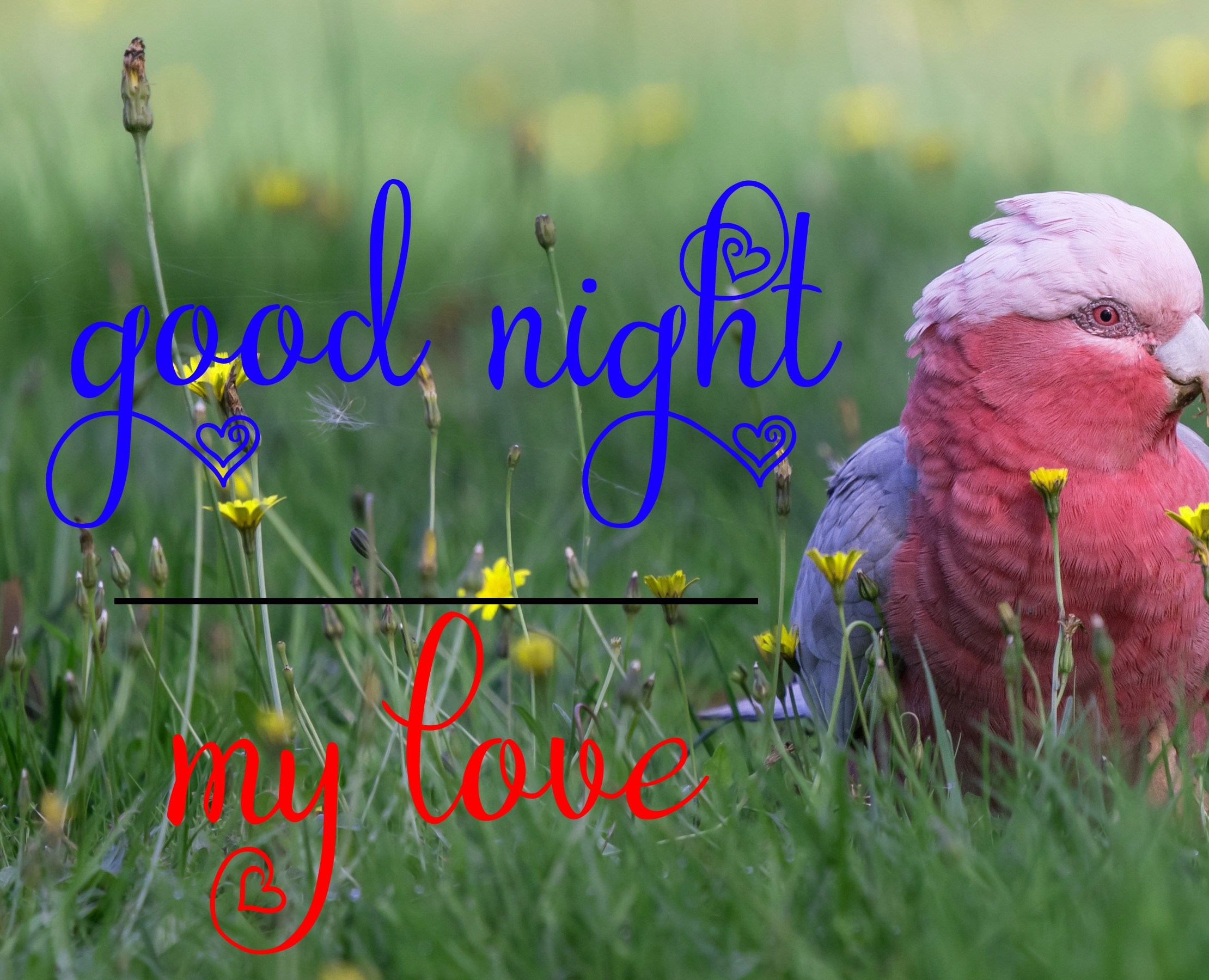Free good night Images 47