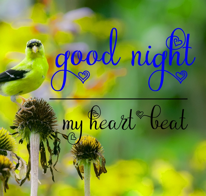 Free good night Images 50