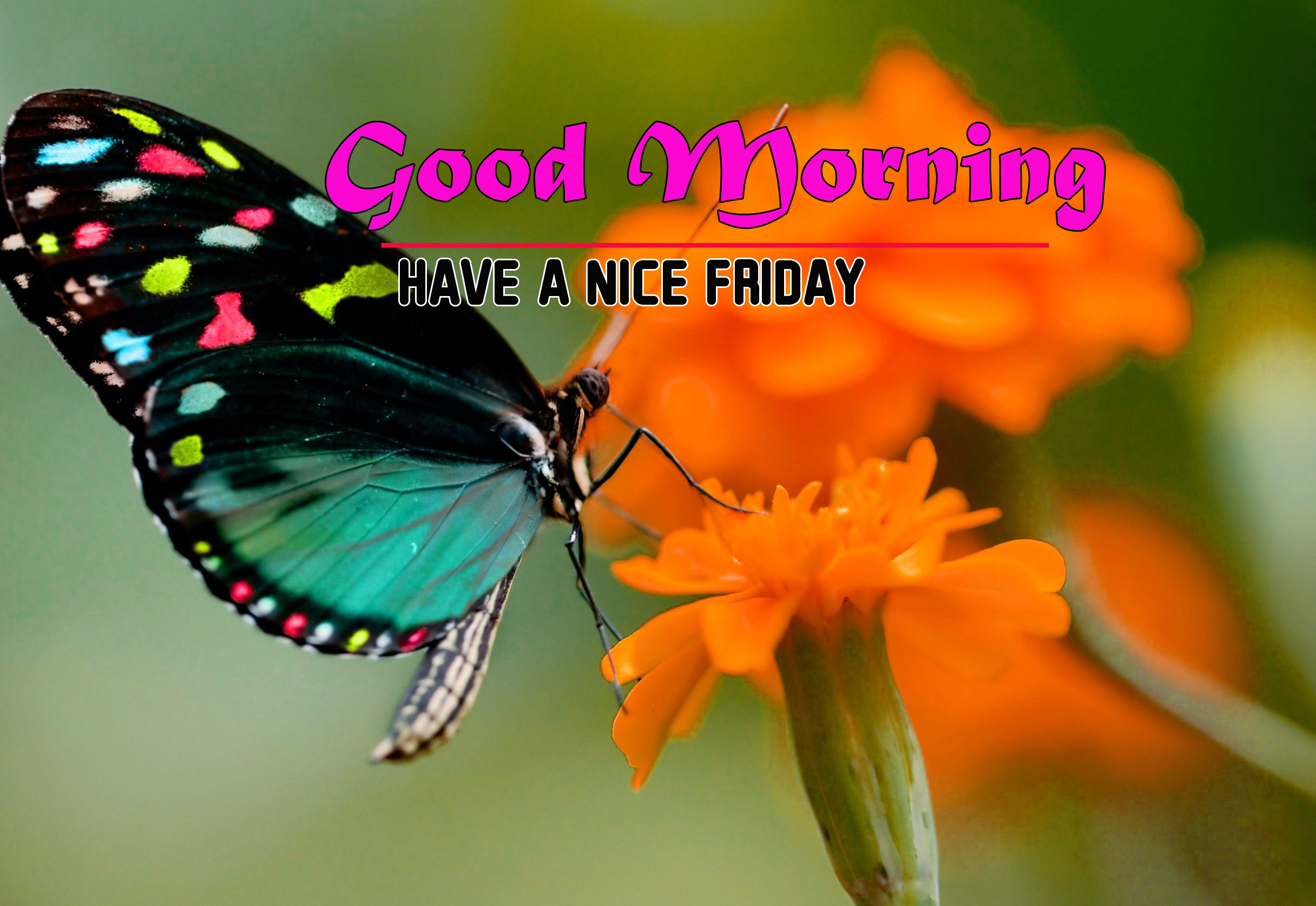 Friday Good Morning Images 2