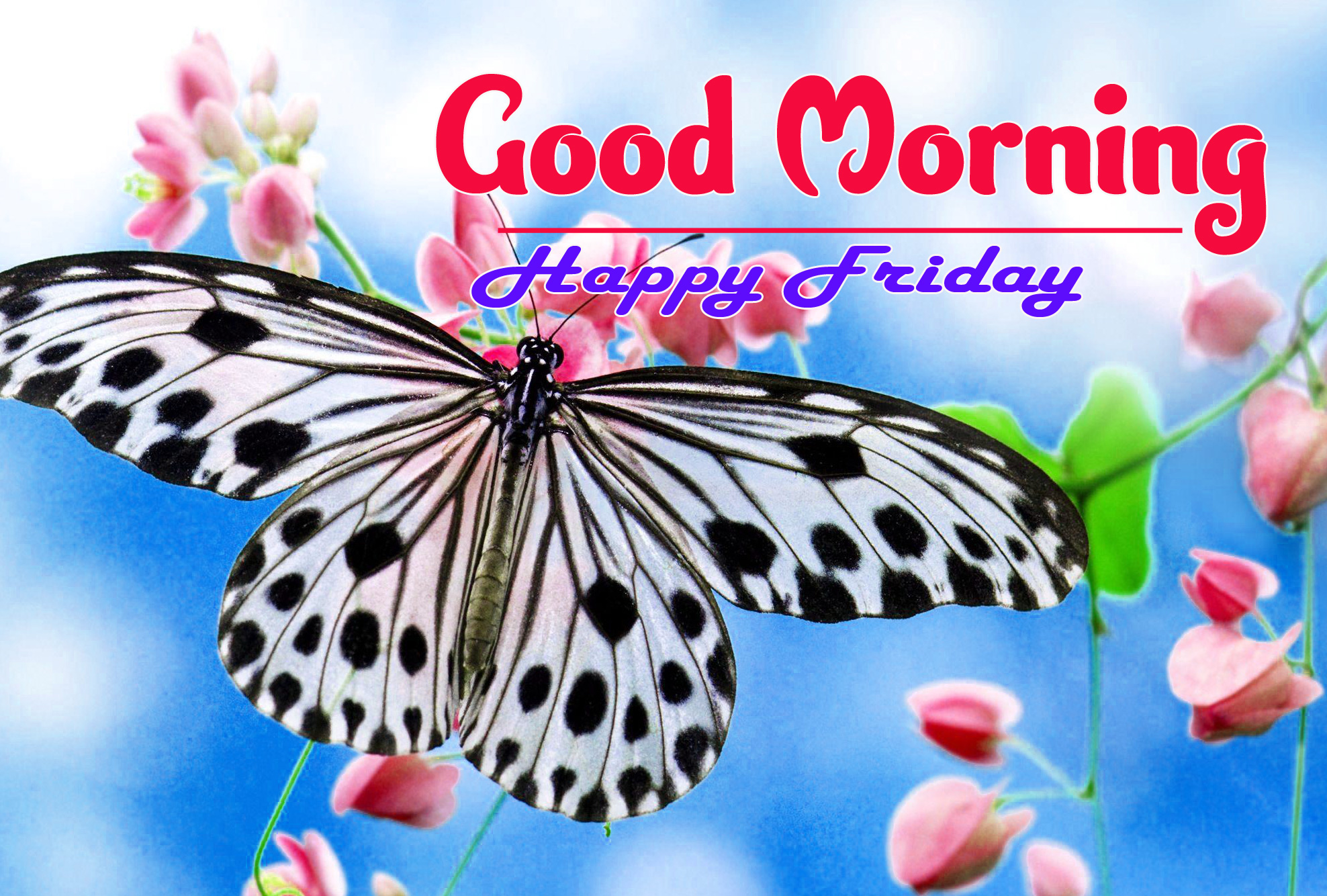 Friday Good Morning Images 5