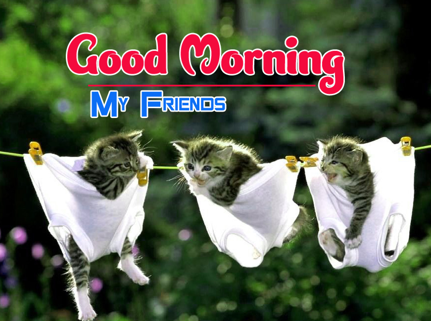 Funny Good Morning Wallpaper 3