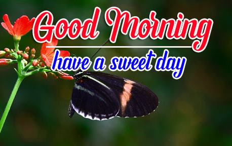 Good Morning HD Free Wallpaper Images Download With Btterfly
