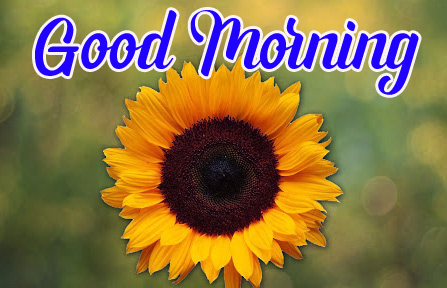 Free Good Morning Pics Download With Sunflower