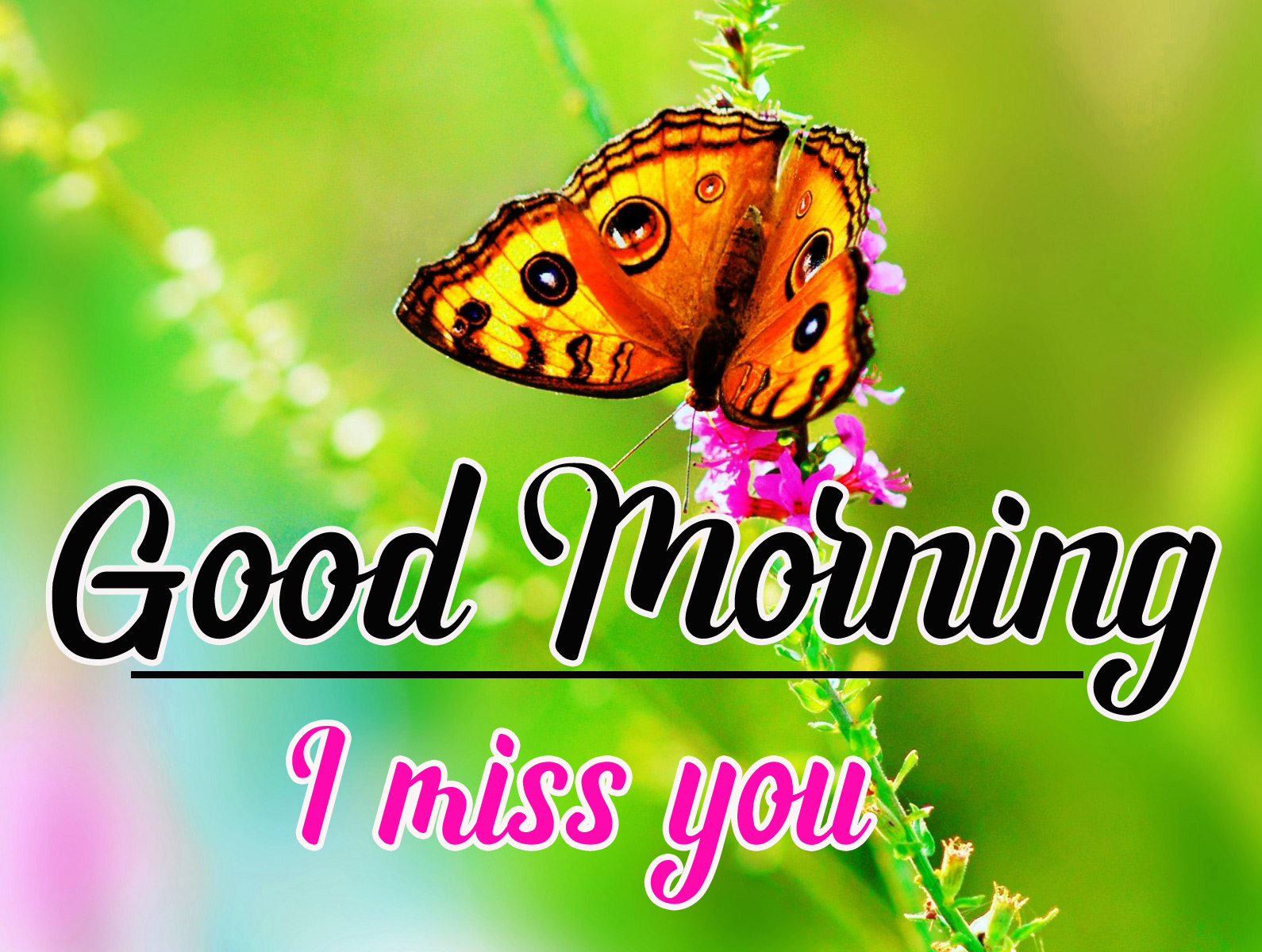 Free Good Morning Wallpaper for Facebook