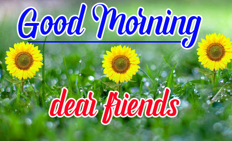 Sunflower Free Good Morning Pics Download