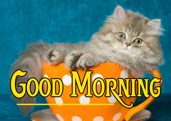 Good Morning Pics 81
