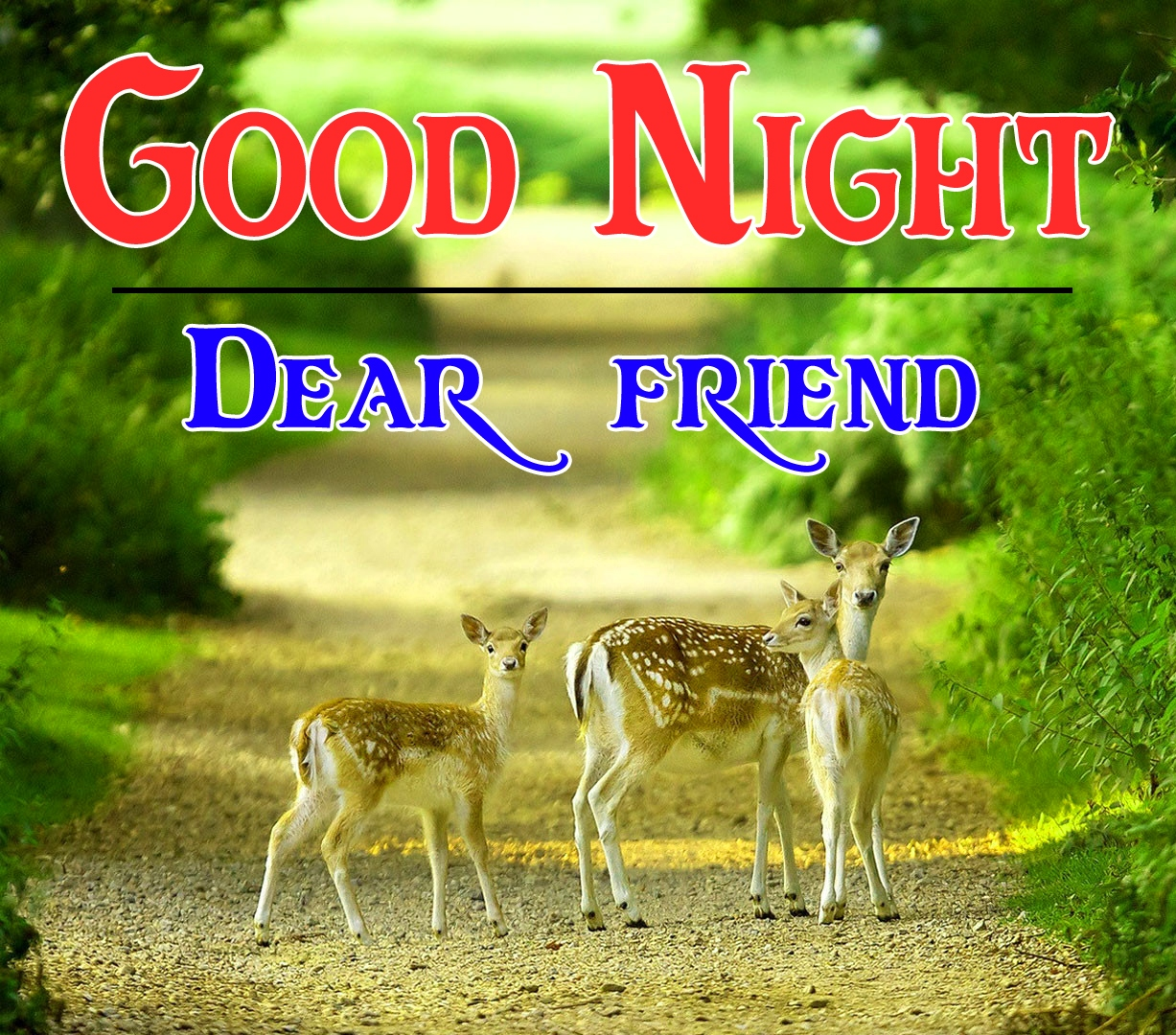 Good night wallpaper hd 100