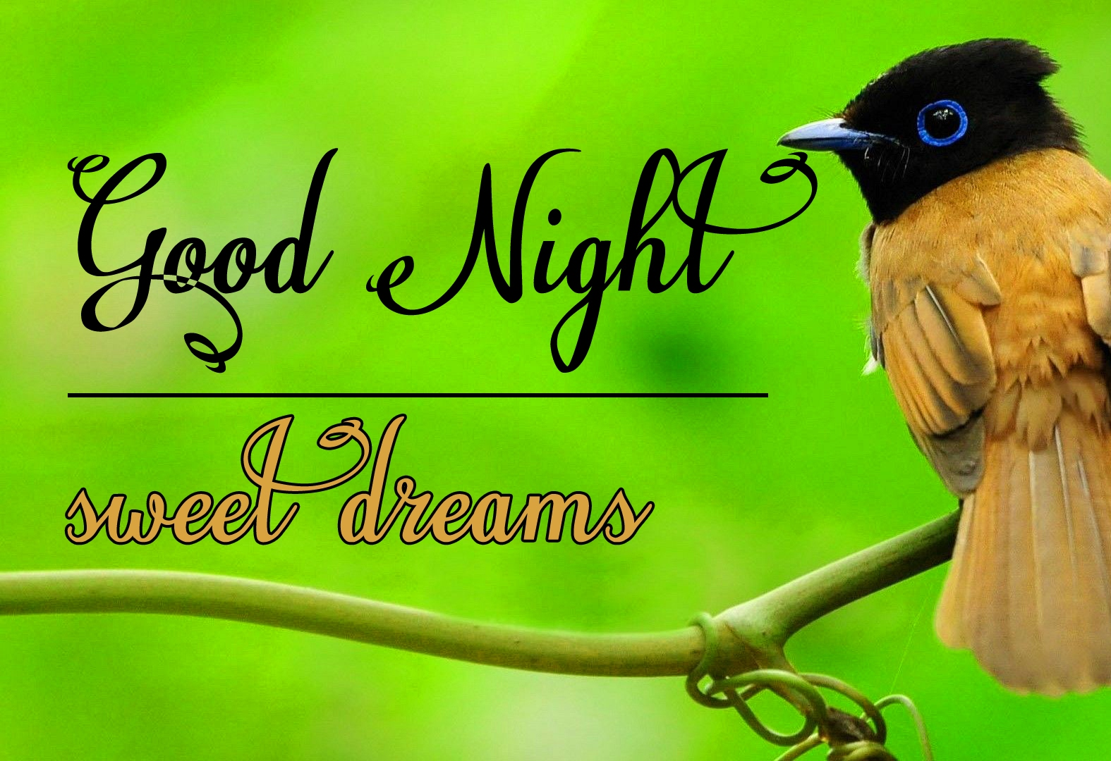 Good night wallpaper hd 21 1