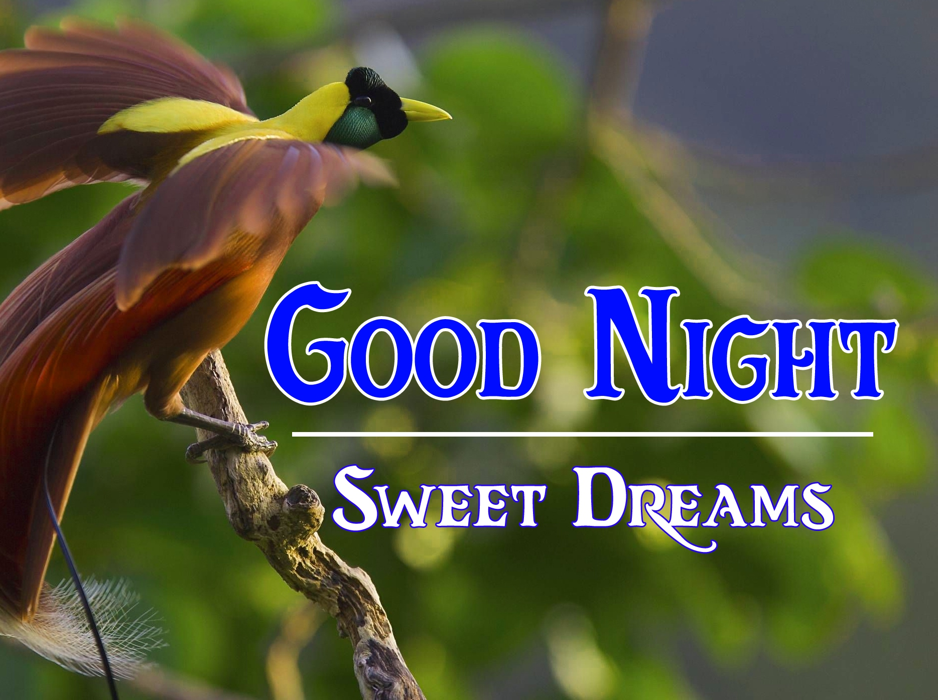 Good night wallpaper hd 33 1