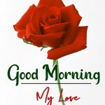 Morning Wishes Images With Red Rose 3