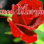 Red Rose Good Morning Images 24