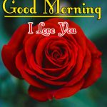 Red Rose Good Morning Images 47
