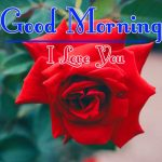 Red Rose Good Morning Images 48