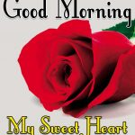 Red Rose Good Morning Images 7