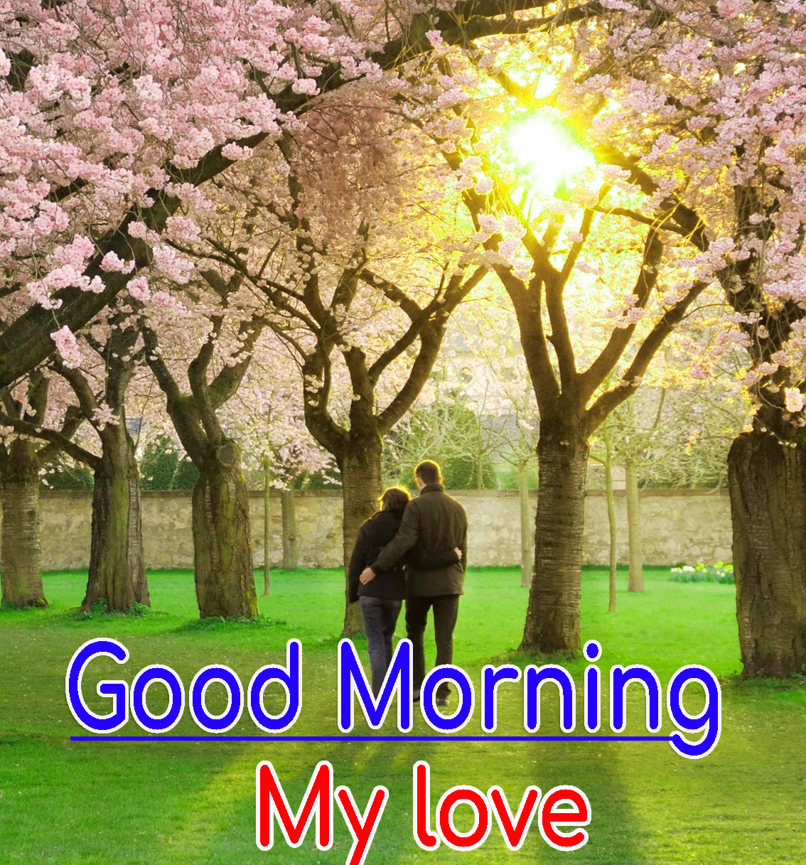 Romantic Good Morning Images HD Download Free