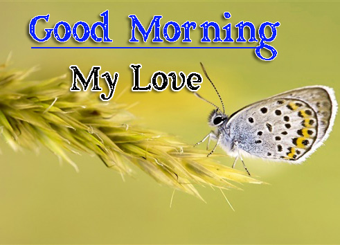 Very Good Morning Images Wallpaper Free Download