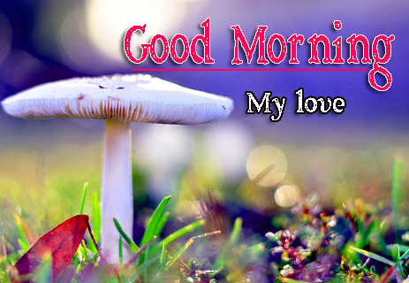 Free 1080p Very Good Morning Images Wallpaper Download