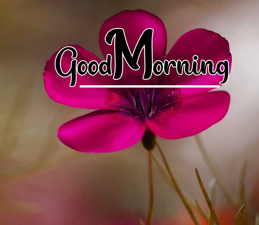 Beautiful Good Morning Wallpaper 12 4