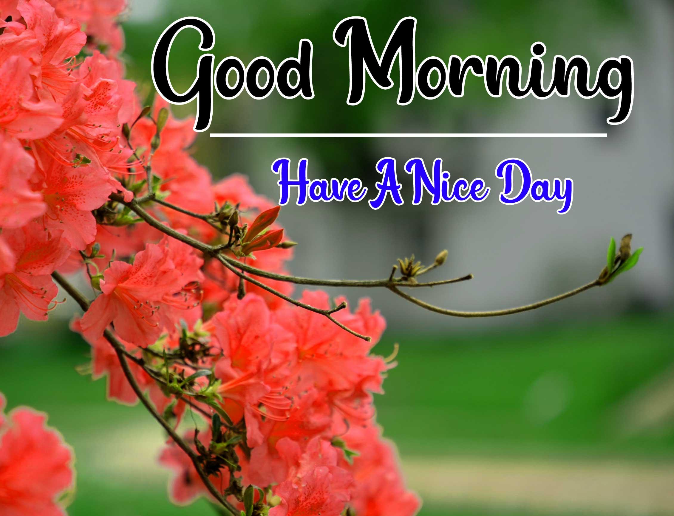 Beautiful Good Morning Wallpaper 14 3