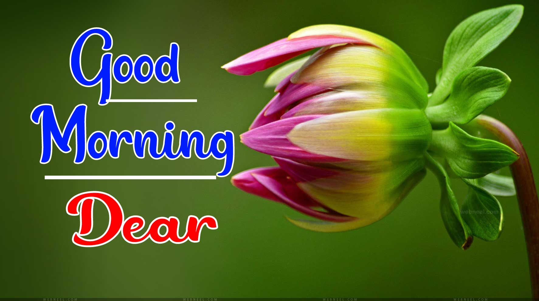 Beautiful Good Morning Wallpaper 15