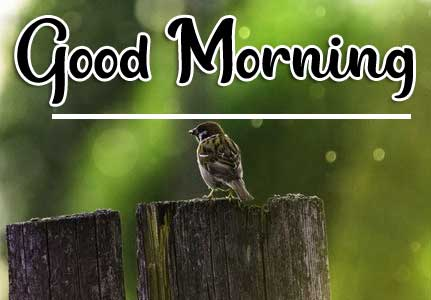 Beautiful Good Morning Wallpaper 17 4