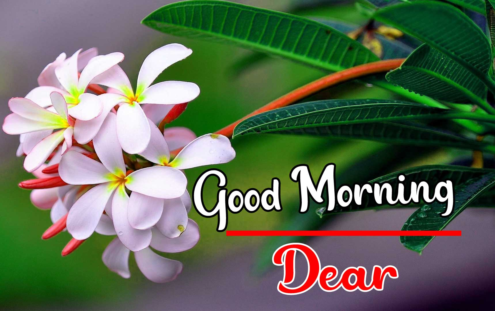 Beautiful Good Morning Wallpaper 28 4