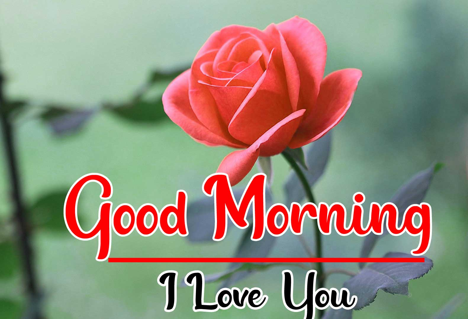 Beautiful Good Morning Wallpaper 40