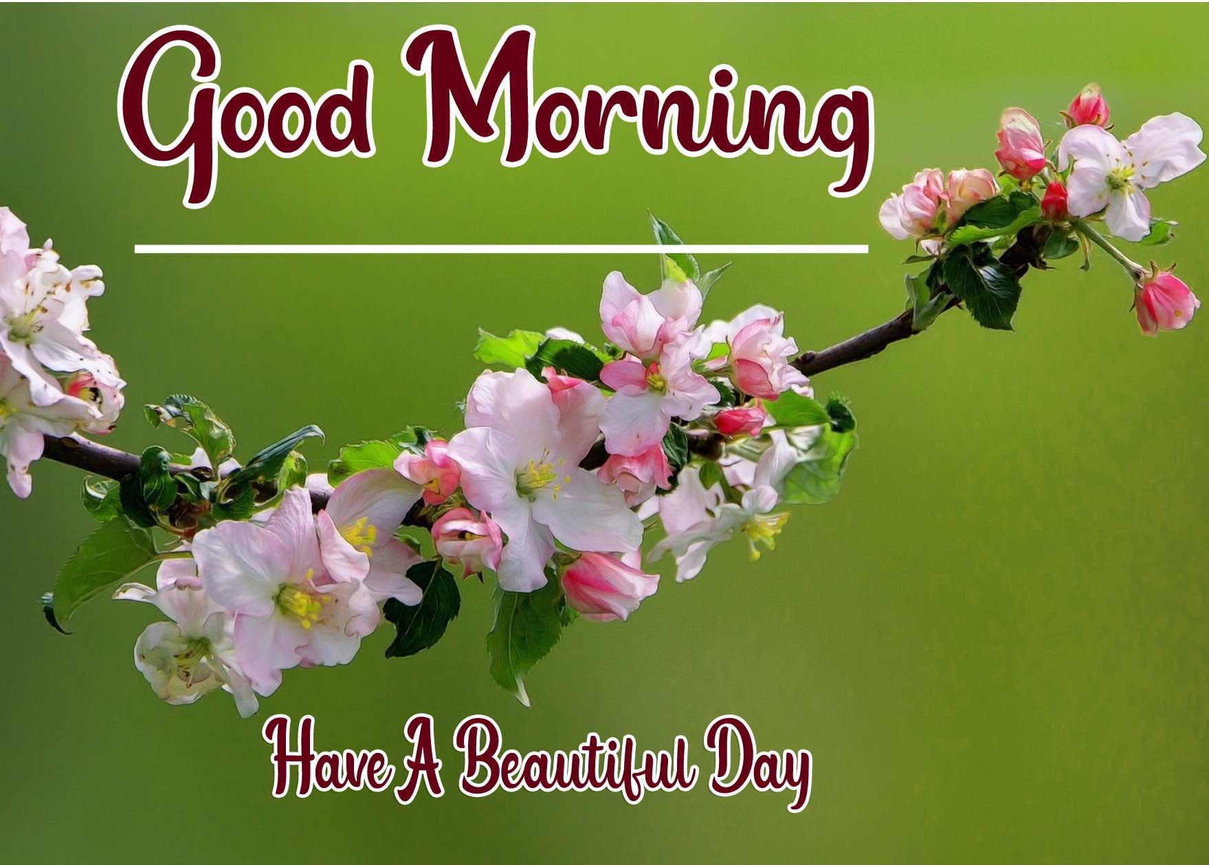 Beautiful Good Morning Wallpaper 42 3