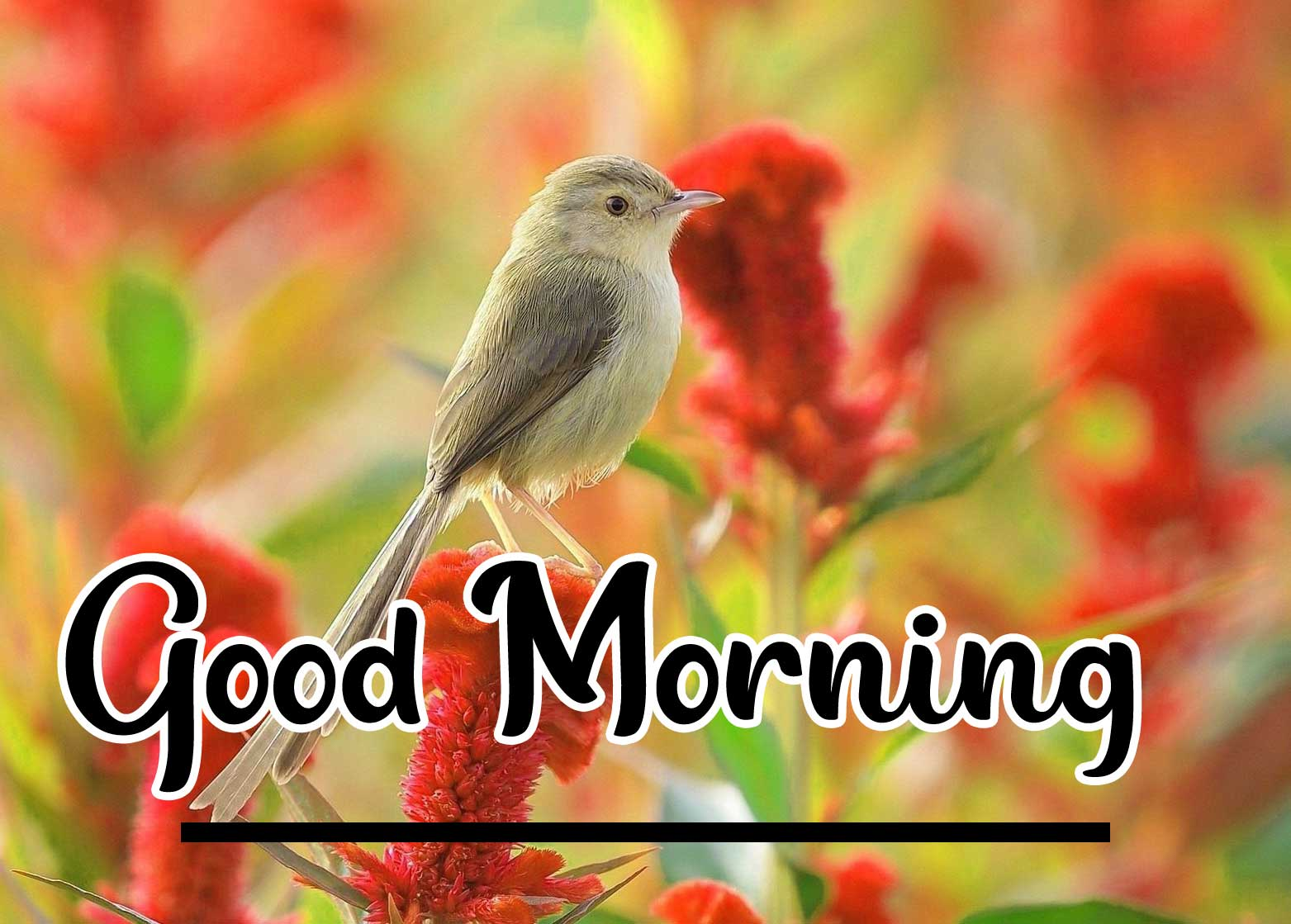 Beautiful Good Morning Wallpaper 63