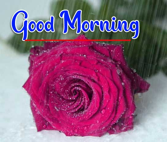 Beautiful Good Morning Wallpaper 7