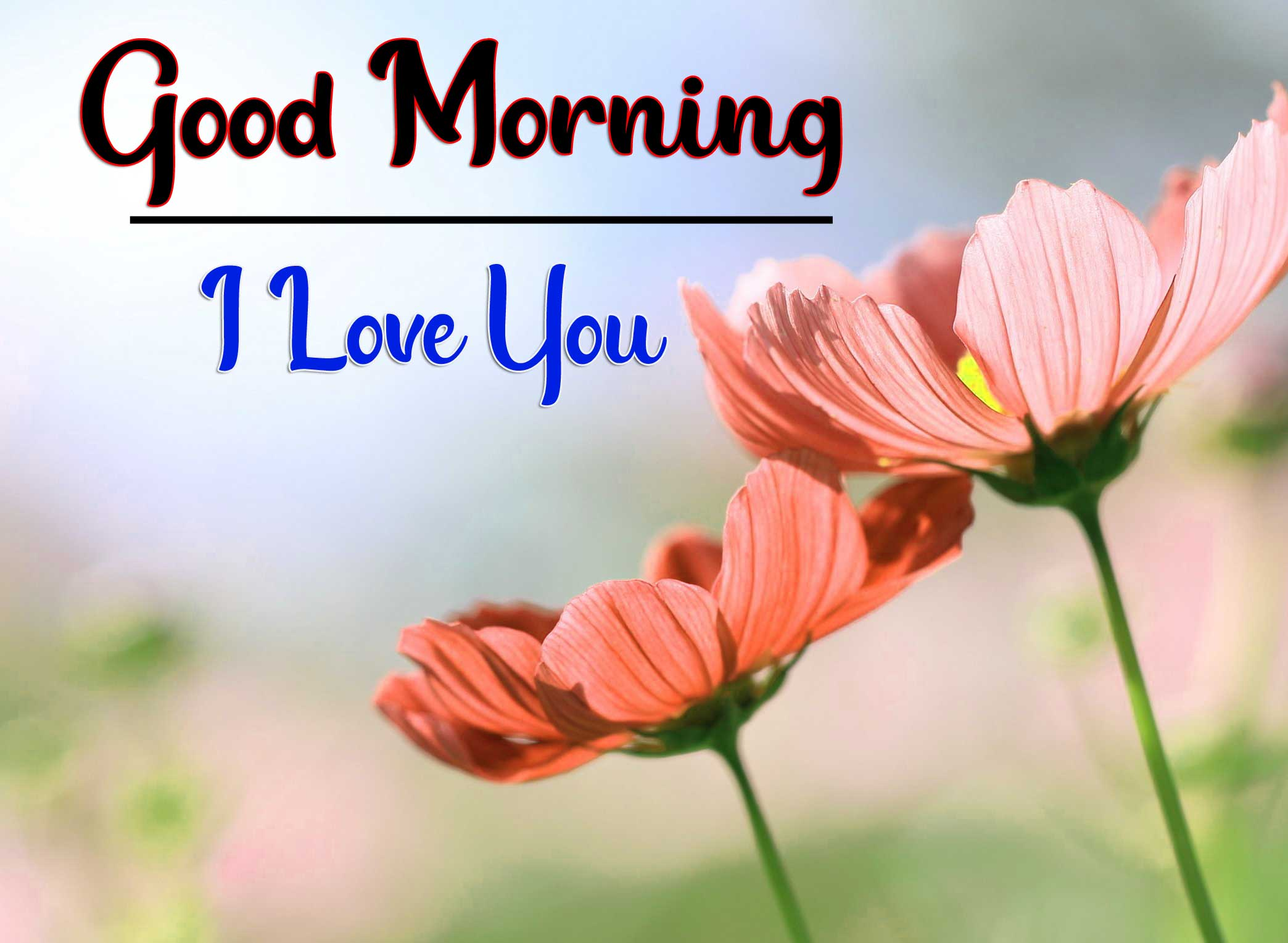 Beautiful Good Morning Wallpaper 71 1