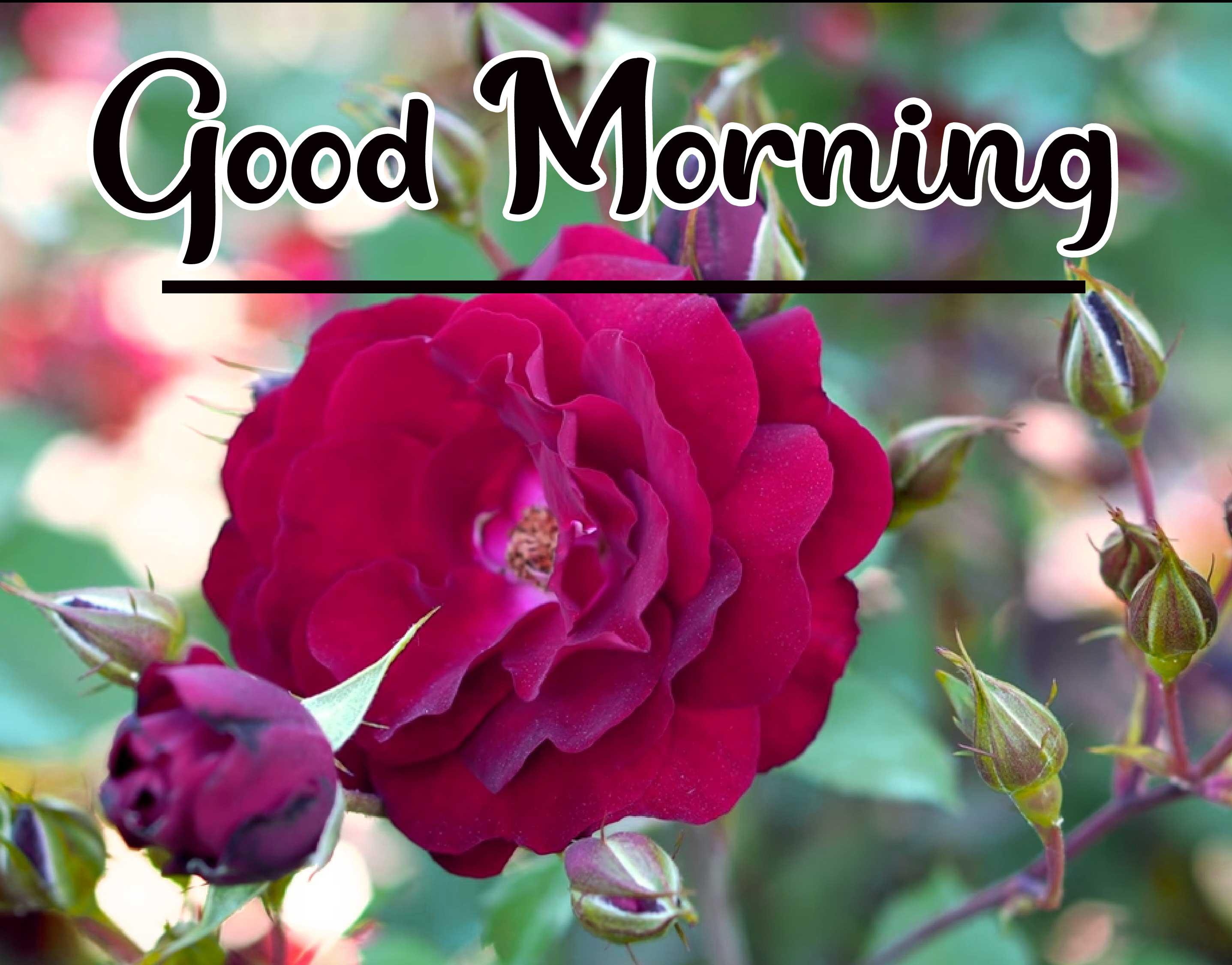Beautiful Good Morning Wallpaper 73 1
