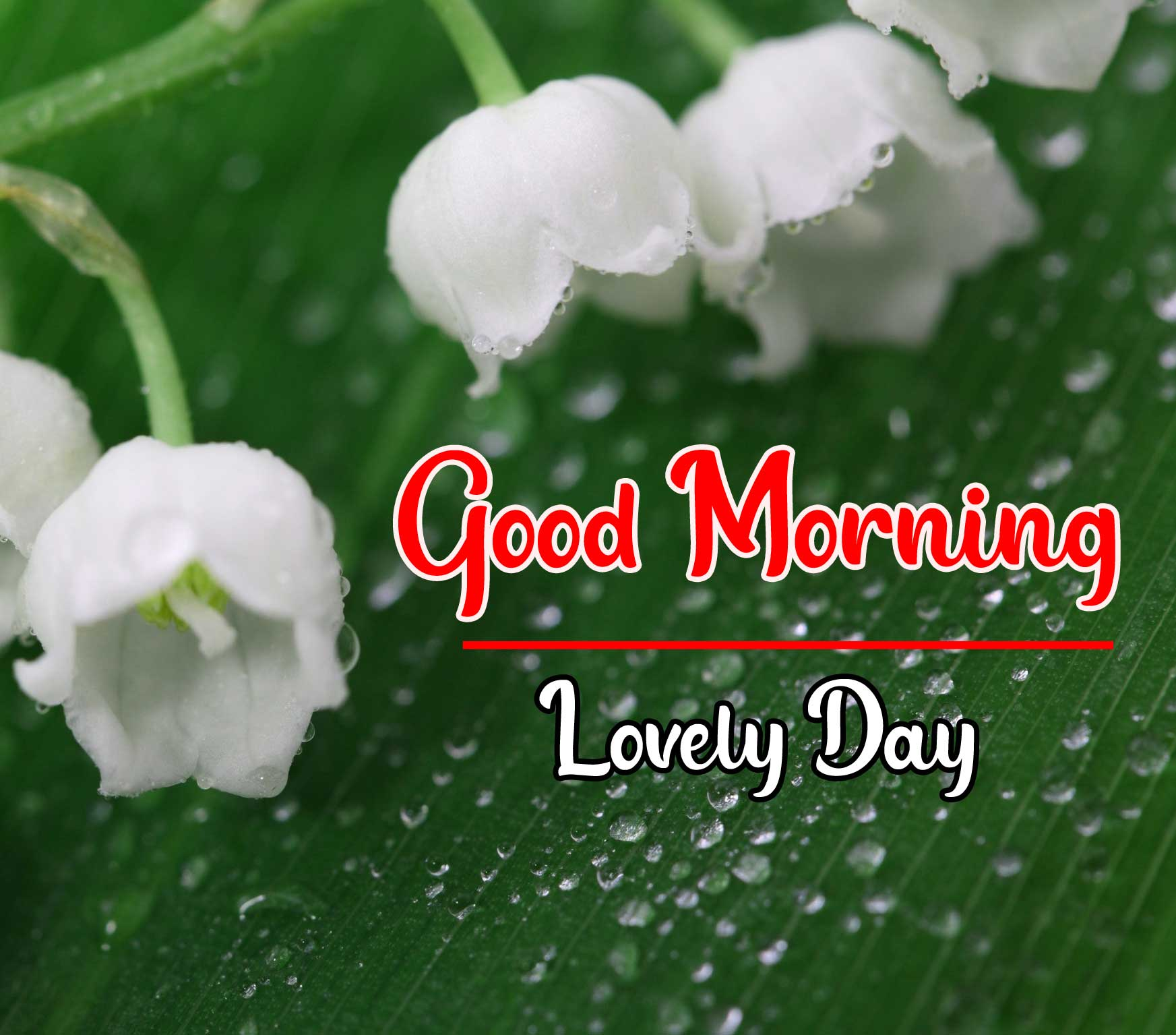 Beautiful Good Morning Wallpaper 82