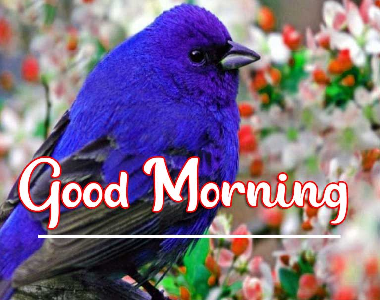 Beautiful Good Morning Wallpaper 89
