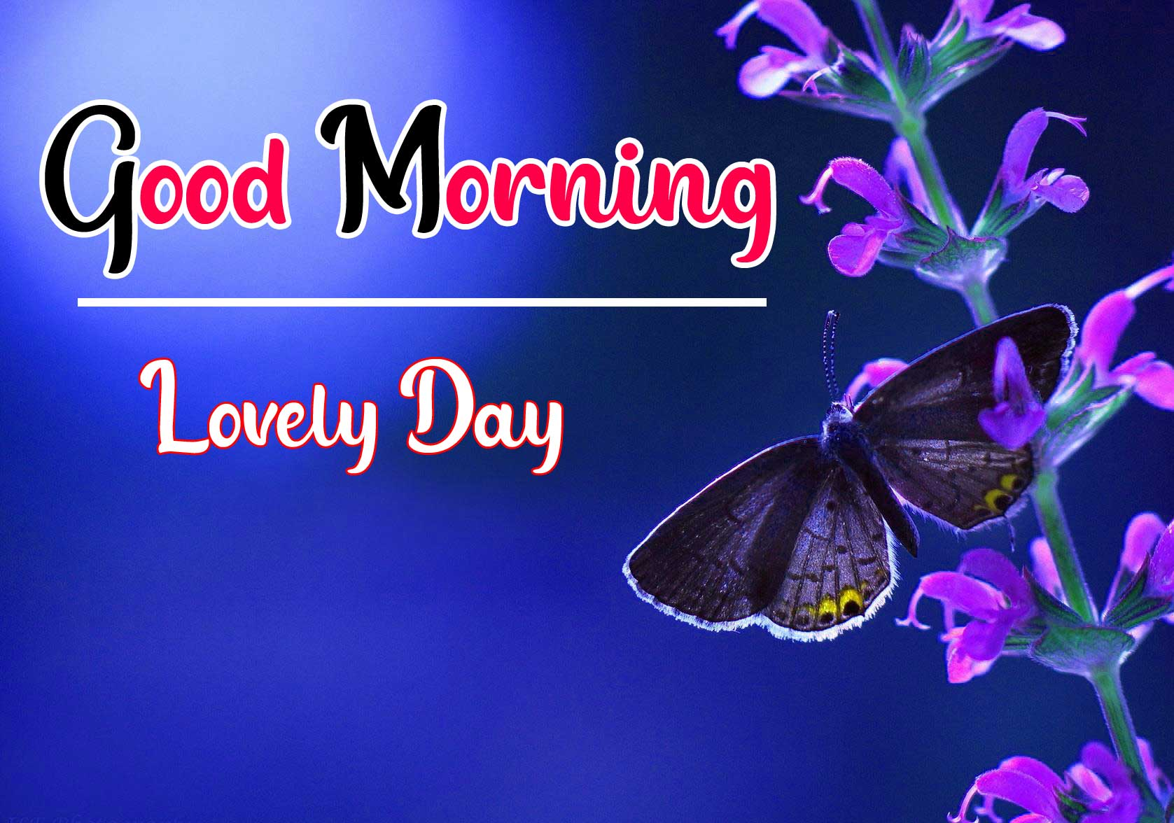 Beautiful Good Morning Wallpaper 93