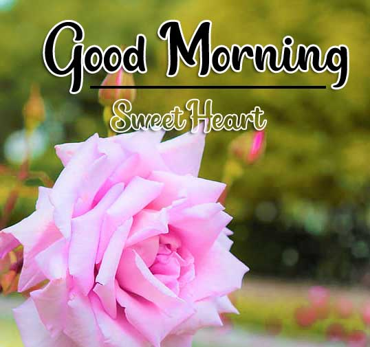 Beautiful Good Morning Wallpaper 98 1