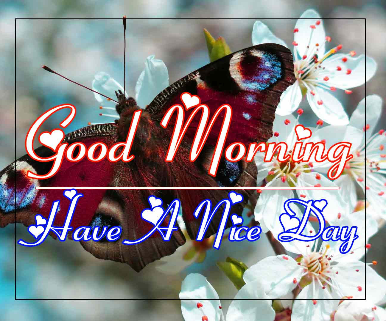 Best Good Morning Images 14