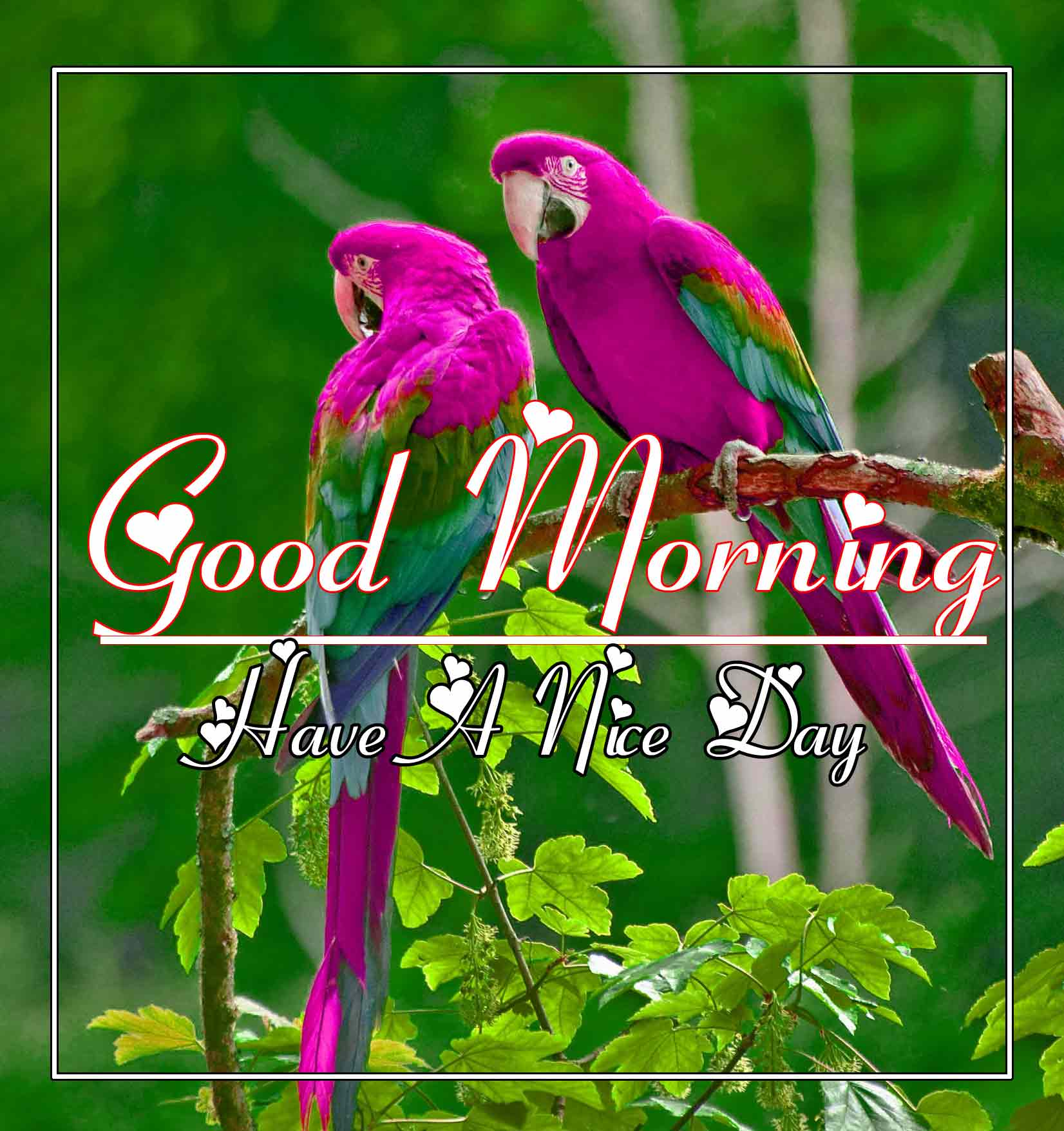 Best Good Morning Images 15