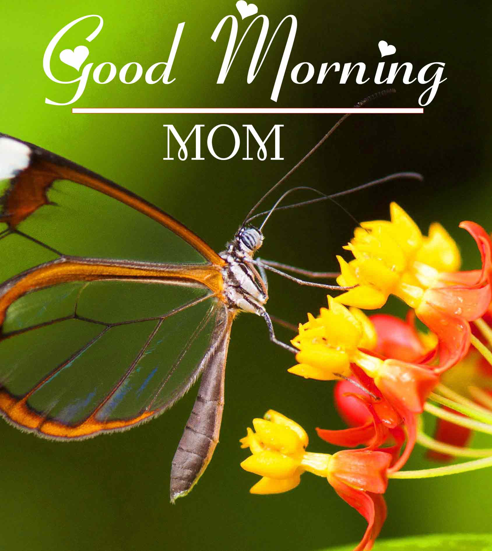 Best Good Morning Images 16