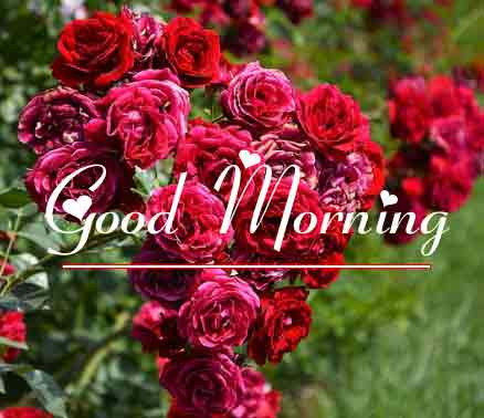 Best Good Morning Images 20