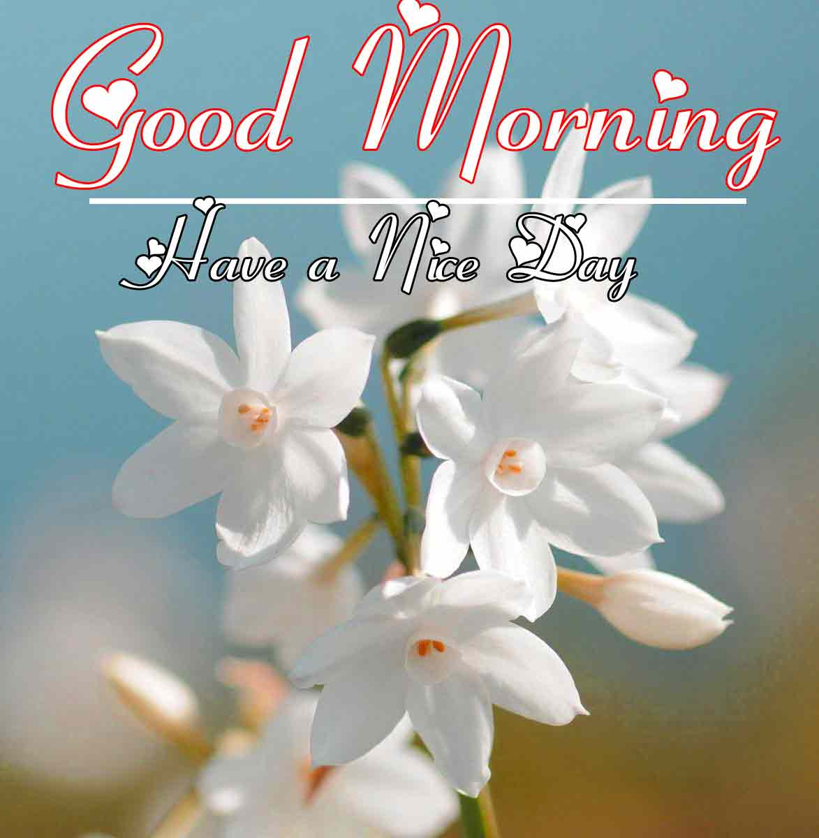 Best Good Morning Images 22