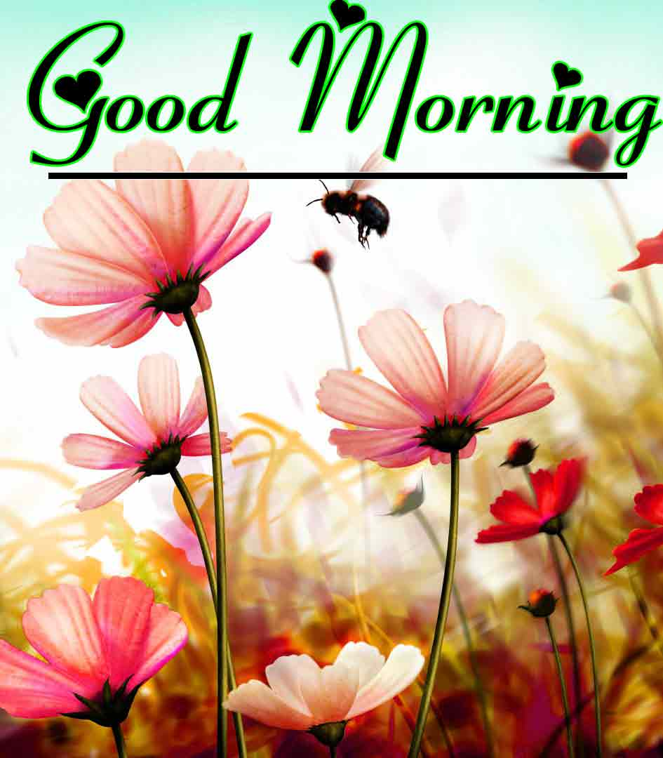 Best Good Morning Images 28