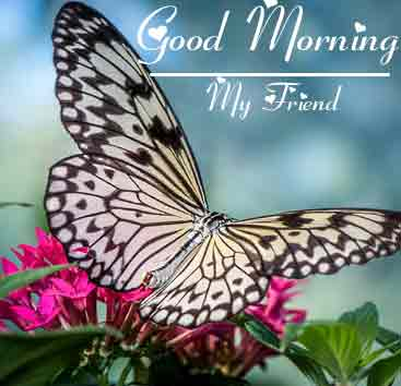 Best Good Morning Images 4