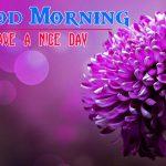 Flower Good morning HD Images 7
