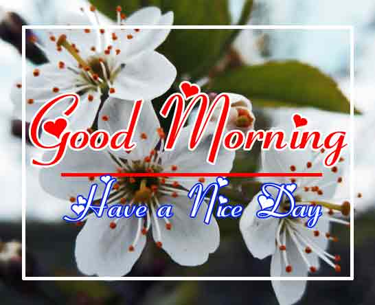 Free New morning Images HD 32