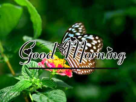 Free New morning Images HD 35